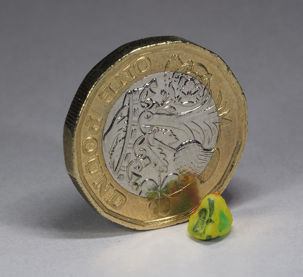 A human milk tooth, shown with a pound coin to illustrate its small size